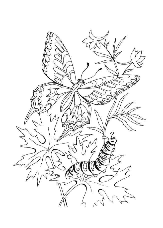 Motyl Kolorowanki Motyle