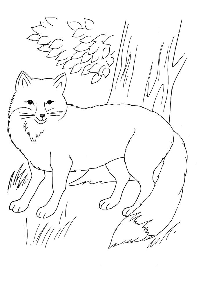 lis Kolorowanki Kolorowanki Dzikie zwierzęta