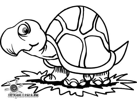 Żółwie Kolorowanki Kolorowanki Dzikie zwierzęta