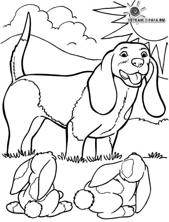 Kolorowanka jamniki Kolorowanki Psy