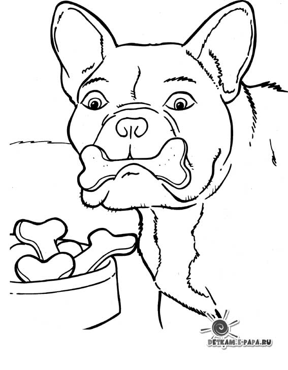 Kolorowanka pies bokser Kolorowanki Psy