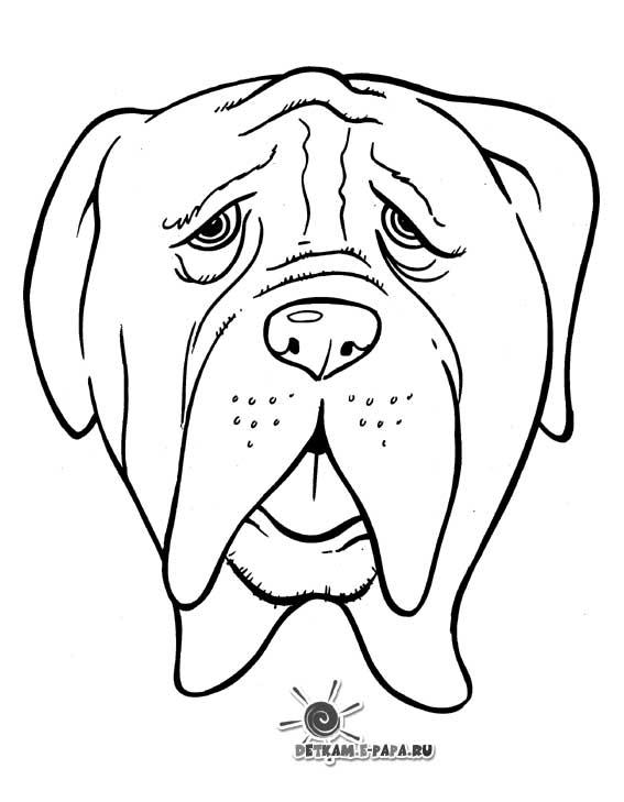 Kolorowanka buldog Kolorowanki Psy